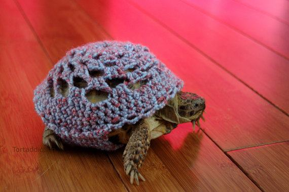 Yarn Bombed Turtle
